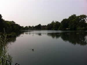 The boating lake is popular with families and hosts an array of wildfowl