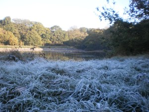 The first frost last year was recorded on November 6th. Much hoar was seen around the shady banks of Shoulder of Mutton pond in Wanstead Park