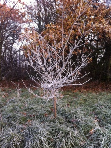 Frosted tree in Wanstead Park by Scott Whitehead