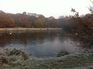 Shoulder of Mutton Pond, Wanstead Park by Scott Whitehead