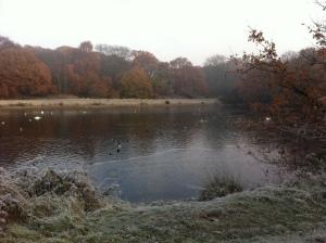 Shoulder of Mutton Pond, Wanstead Park by Scott Whitehead