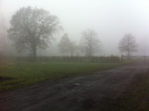 Trees in fog by WansteadMeteo
