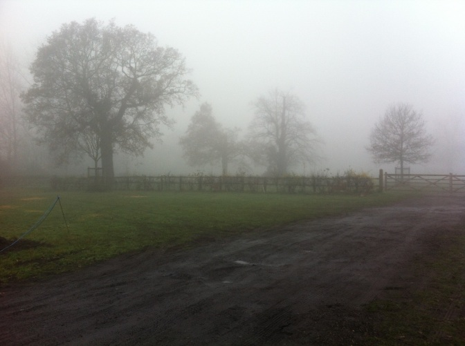 Wanstead Weather – December 2013