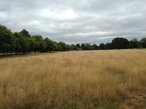 Grasslands around Wanstead Park have gradually turned brown because of the lack of rainfall since March