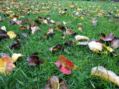 leaf fall oct 15