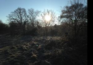 hoar-frost-wp