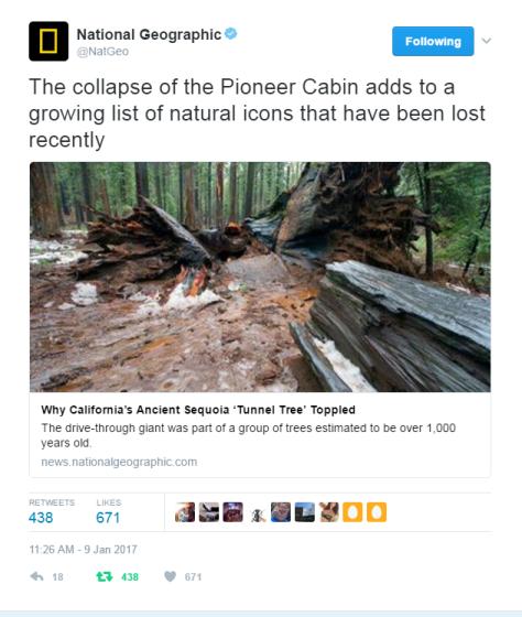 pioneer-cabin-tree