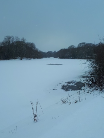 Ice on Heronry pond was very thick by the end of the cold spell due to the penetrating frost