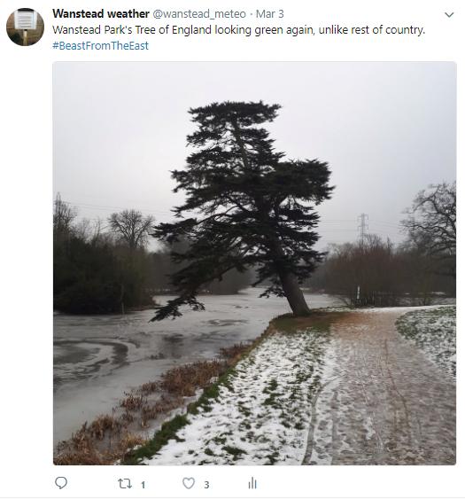 mar 3 tree eng thaw