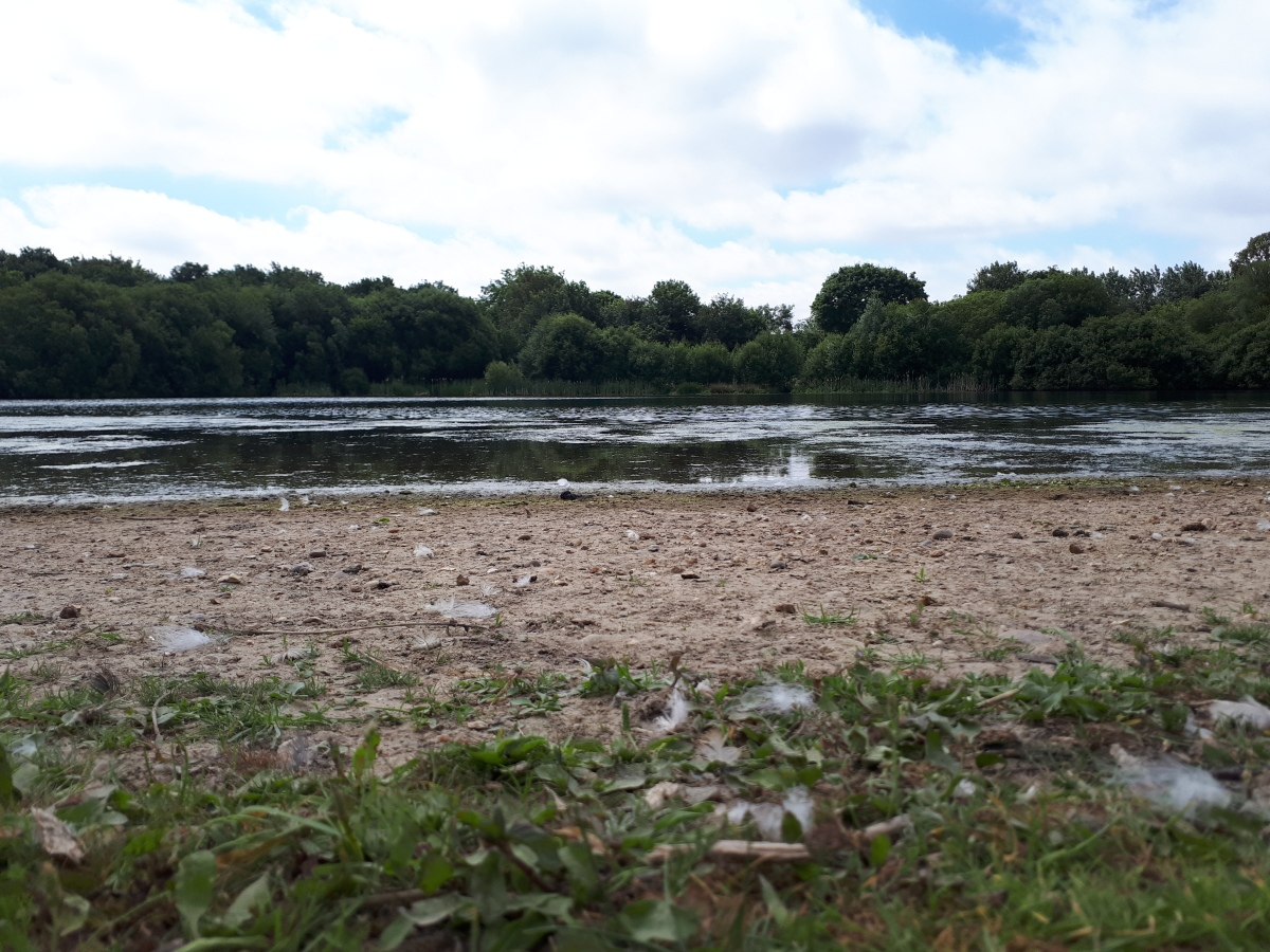 Wild swimming in Wanstead Park?
