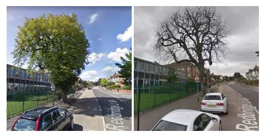 The disappearing street trees of Wanstead