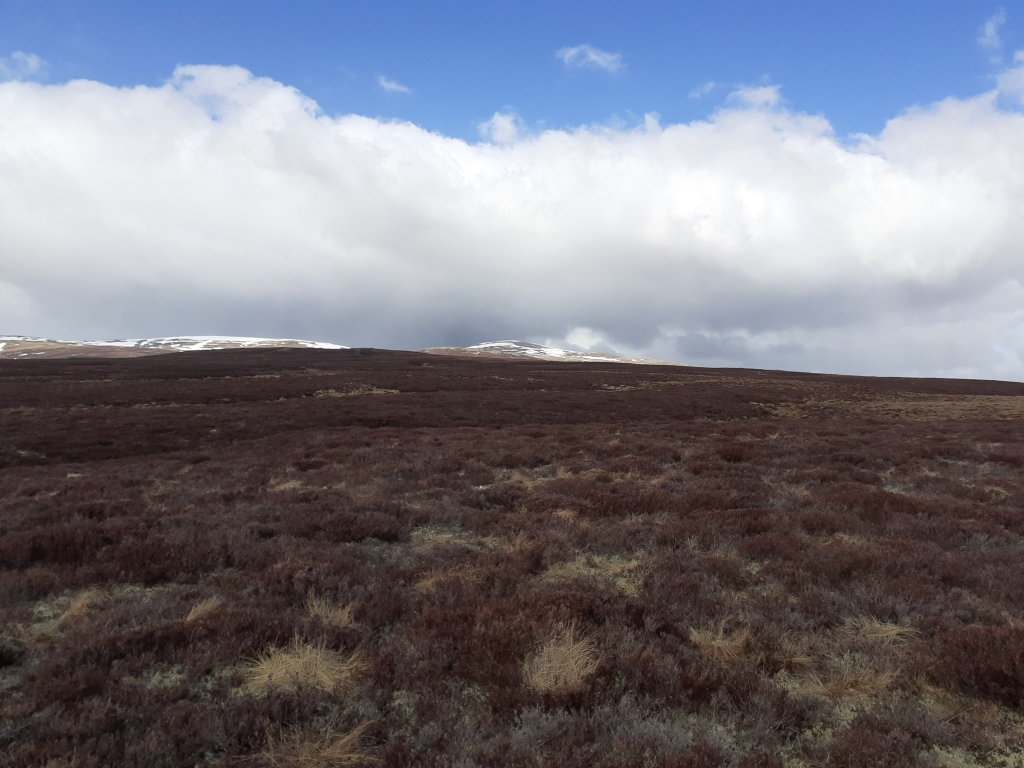 The foothills of the Cairngorm 4000s